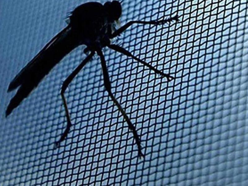 muggenhorren